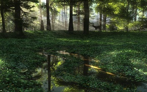 Wallpaper forest, water, nature, people, plants, art, puddles, ROE, the sun's rays