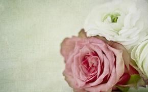 Picture macro, rose, texture, buds, Ranunculus