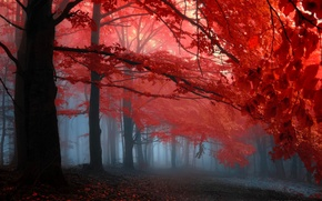 Picture autumn, forest, leaves, trees, fog, the crimson