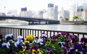 Picture flowers, bridge, city, the city, river, building, fence, Japan, Tokyo, Tokyo, Japan, Pansy, river, bridge, …