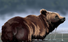 Picture water, drops, bear, art, fur