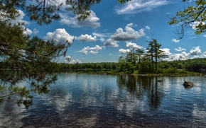 Picture forest, clouds, trees, branches, lake, island