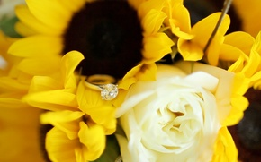 Picture flowers, stone, ring, decoration