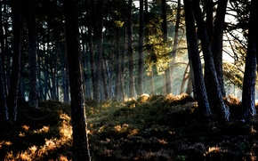 Picture forest, the sun, light, nature