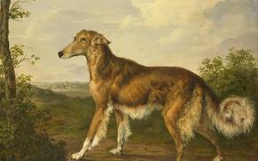 Picture dog, picture, Siberian Greyhound, Jan Dasveldt