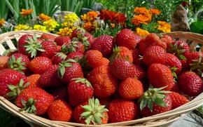 Wallpaper berries, basket, strawberry