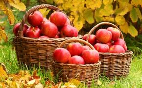 Wallpaper autumn, leaves, apples, weed, basket