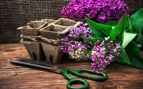 Picture flowers, branches, mesh, Board, pots, lilac, scissors