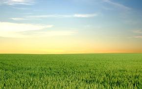 Wallpaper greens, field, horizon, 152
