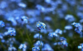 Wallpaper focus, flowers, green, nature, blur, bokeh, yellow, color, blue