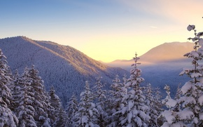 Picture forest, the sky, snow, trees, mountains, Winter