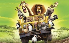 Wallpaper mood, cartoon, Savannah, Madagascar, Madagascar