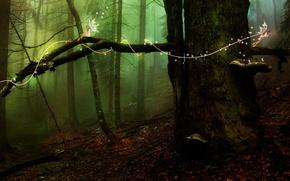 Wallpaper forest, tree, elves