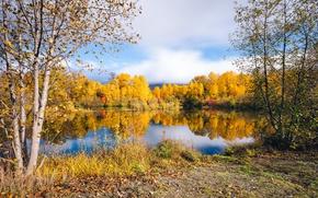Picture autumn, trees, lake, foliage, the colors of autumn