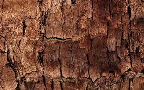 Picture wood, brown, pattern, bark