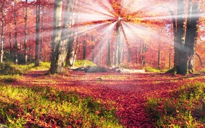 Picture Nature, Autumn, Trees, Forest, Leaves, Ukraine, Carpathians, Rays Of Light