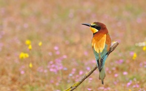 Wallpaper flowers, Golden bee-eater, peeled, bird