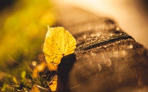 Picture autumn, grass, macro, glare, yellow, blur, leaf
