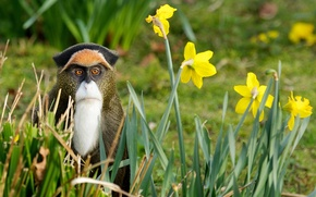 Picture grass, flowers, nature, monkey