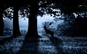 Picture morning, deer, forest, nature