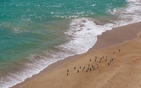 Picture birds, nature, the ocean, shore