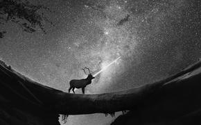 Picture night, deer, starry sky