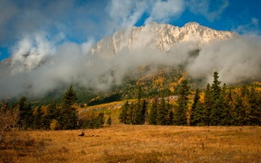 Picture autumn, clouds, trees, mountains, nature, fog, spruce, coniferous