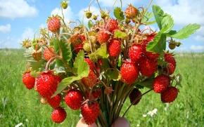 Wallpaper berries, strawberries, bouquet