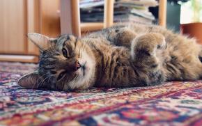 Picture cat, cat, light, house, Mat, Kote