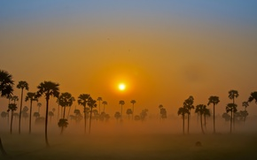 Picture fog, palm trees, the sky, dawn, the sun