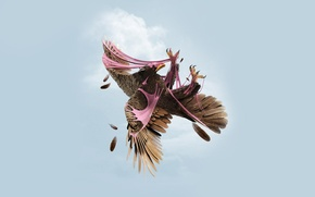 Wallpaper eagle, Eagle, background, gum, the sky, clouds
