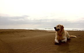 Picture sand, beach, the sky, dog, horizon, dog