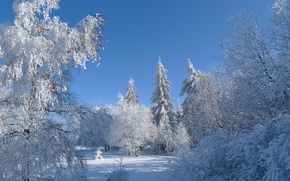 Picture winter, frost, the sky, snow, trees