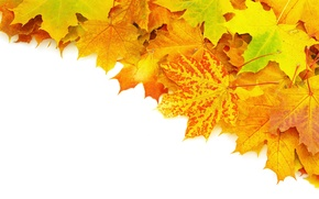 Picture autumn, leaves, veins, brightness, heap