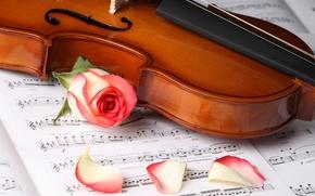 Wallpaper flowers, roses, petals, violin