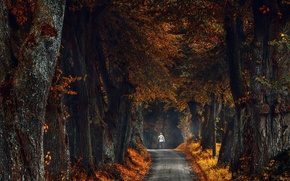 Wallpaper autumn, trees, road