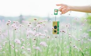 Wallpaper summer, camera, Fuji film