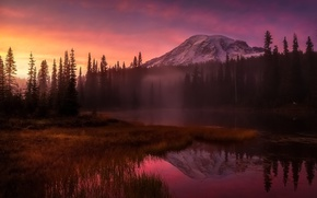 Picture forest, light, mountains, fog, the evening, morning