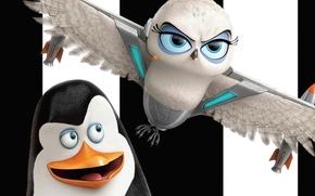 Picture white, black, animals, bird, eyes, flight, wings, feathers, cartoon, owl, female, gray, Eva, male, headphone, …
