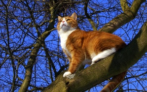 Picture cat, the sky, cat, tree, spring, red, pussy, cat, Mats&Muffi's