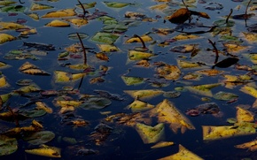 Picture autumn, leaves, water, lake, surface, drowned