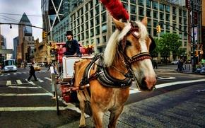Picture street, wagon, New York, street