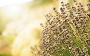 Picture field, light, flowers, blur, purple, lavender