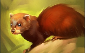 Wallpaper fur, ferret, look, animal, art, forest