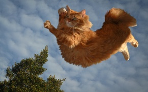 Picture clouds, red cat, cat parkour