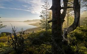 Wallpaper fog, Landscape, web, Bay, forest