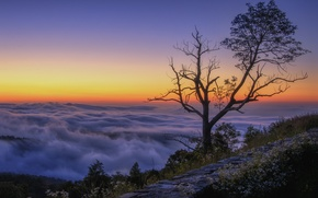 Picture clouds, mountains, sunrise, tree, morning, top