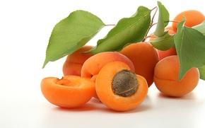 Picture leaves, branch, fruit, bone, apricots