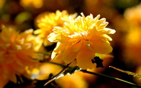 Wallpaper flower, macro, branch, spring, the sun