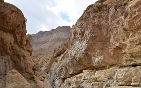 Picture Nature, Yellow, Wild, Summer, Stone, Desert, Israel, Nofilter